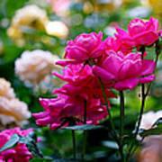 Rittenhouse Square Roses Art Print