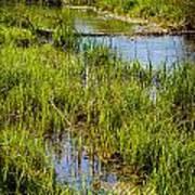 River Kennet Marshes Art Print