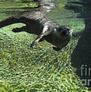 River Otter-7714 Art Print