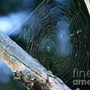 River Spider Web   Art Print