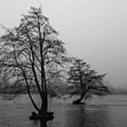 River Trees And Fog Art Print