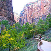 River Walk In Zion Canyon In Zion Np-ut Art Print