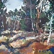 River Woods Art Print