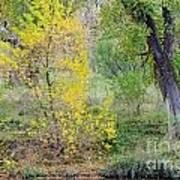 Riverbank Colors Art Print
