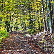 Road In The Forest Art Print