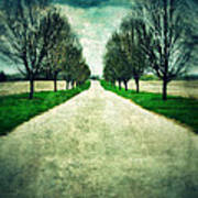 Road Lined By Trees Art Print