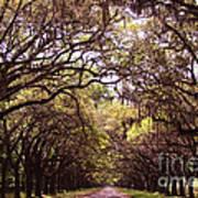 Road Of Trees Art Print