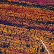 Road Through Fall Colored Tundra Art Print