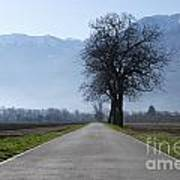 Road With Trees Art Print