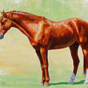 Roasting Chestnut - Morgan Horse Art Print