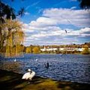 Roath Park Lake Art Print