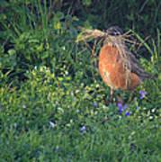 Robin Gathering For Nest Art Print