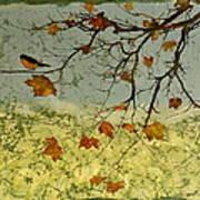 Robin In Maple Art Print by Carolyn Doe
