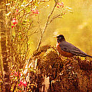 Robin In Spring Art Print