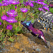Rock Flower Birguana Fly Art Print