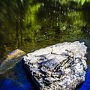 Rock In The Water Art Print