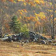 Rock Pile In Maine Blueberry Field Art Print
