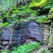 Rock Wall Trail Of The Cedars Glacier National Park Painted Art Print