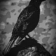 Rockbird Art Print
