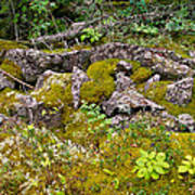 Rocks And Moss II Art Print