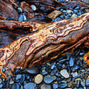 Rocks And Roots Art Print
