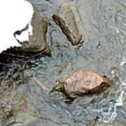 Rocks Snow And Water Art Print