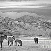 Rocky Mountain Country Morning Bw Art Print