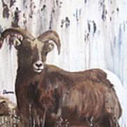 Rocky Mountain High Art Print by Sharon Burger