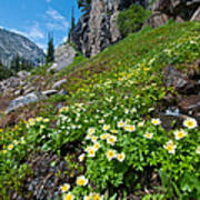 Rocky Mountain Summer Landscape Art Print