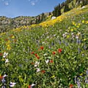 Rocky Mountain Wildflower Landscape Art Print