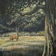 Spirit Of The Moment - Roe Buck Art Print