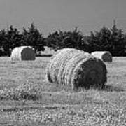 Rolling In The Hay Bw Art Print