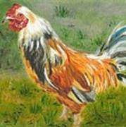 Rooster Rules Art Print