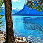 Rooted In Lake Minnewanka Art Print