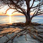 Roots Beach Art Print
