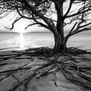 Roots Beach In Black And White Art Print