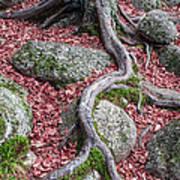 Roots Art Print by Edward Fielding