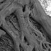 Roots II Art Print