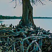 Roots On The Bay Art Print
