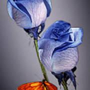 Rosa Azul With Orange Art Print
