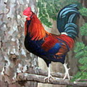 Roscoe The Rooster Art Print by Sandra Chase