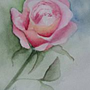 Rose 1 Art Print by Nancy Edwards
