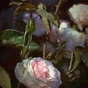 Rose 122 Art Print by Pamela Cooper