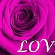 Rose 16 Love Art Print