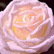 Rose 169 Art Print