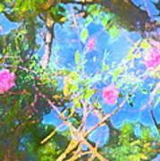 Rose 182 Art Print by Pamela Cooper