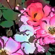 Rose 197 Art Print
