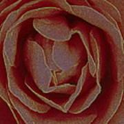 Rose 2 Art Print