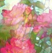 Rose 200 Art Print