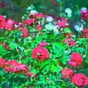 Rose 201 Art Print